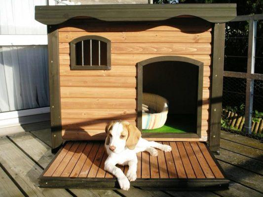"""Sàn nhựa giả gỗ làm chuồng chó cho """"ngôi nhà thú cưng"""" sạch sẽ, bền lâu"""